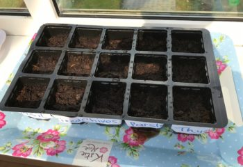 Daithí sowed some herb seeds. Looks like there will some tasty dinners in Daithí's house this Summer!seeds