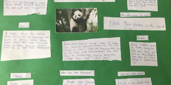 Pandas - by Miya